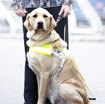 Gino was named Guide Dog of the Year at a ceremony in London