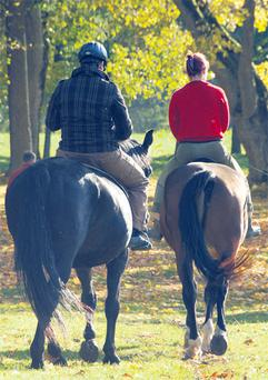 Exercise sessions will keep horses in shape