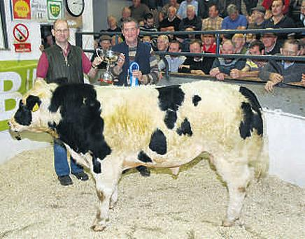 Milford Mart manager John Stewart presents John Doherty with the senior bull reserve champion trophy