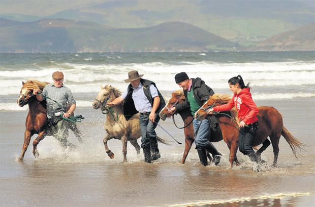 John Mulvihill, Danny Donovan, and Mike and Emma Teahan take their ponies for an annual bath in the sea at Rossbeigh Beach, Co Kerry, yesterday ahead of the sixth annual Kerry Bog Pony Show, which takes place at the Red Fox Inn in Glenbeigh on Saturday