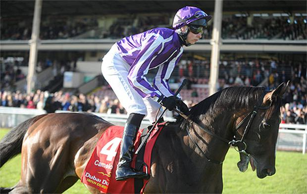 Camelot is likely to be ridden by Frankie Dettori if he runs in Sunday's Arc