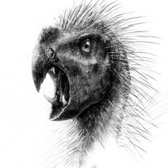 An artist's impression of the parrot-faced dwarf dinosaur Pegomastax which bore a strange mixture of features including quills and fangs