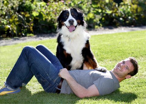 Gordon D'Arcy with 55kg Bernese mountain dog Wilson