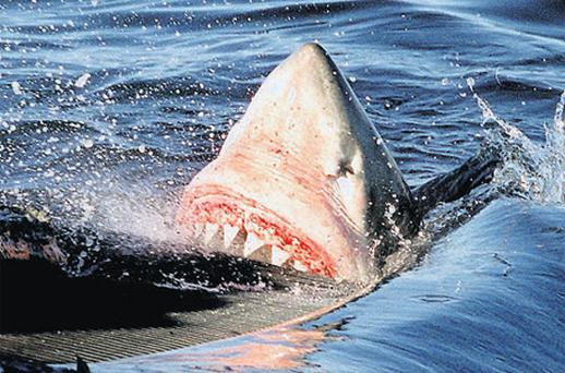 Investors should beware the shark-infested waters of the investment world where all may not be as it seems