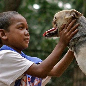 Kabang lost its snout while saving two girls in the Philippines (AP/UC Davis, Anton Lim)