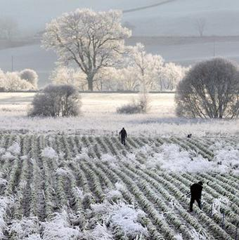 Met Eireann has warned that 'grass frost' is on its way