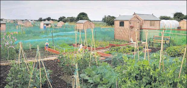 The Malahide Allotments project.