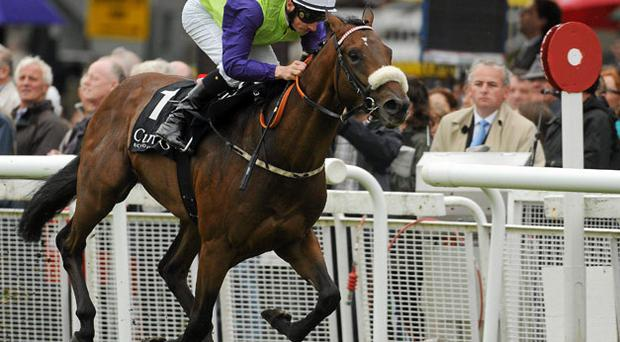 Dunboyne Express, powering home under Declan McDonogh to land the Anglesey Stakes, looks set for a step up in class.