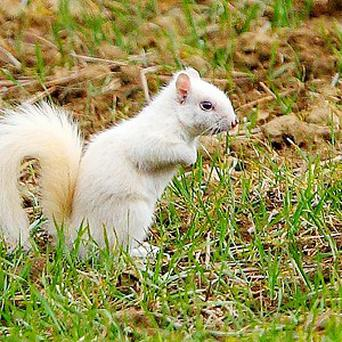 Two rare white squirrels have set up home in woodland near Middlesbrough.
