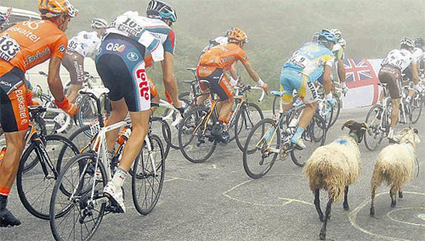 cycling sheep ran across the road for a minute i thought i was on