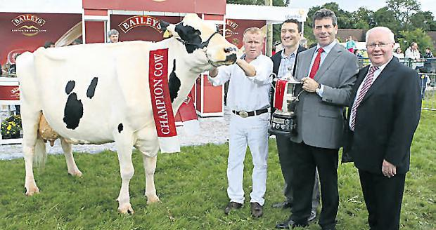 Denis O'Neill shows off the Baileys Champion Cow, Smearlaview Storm Vixen, alongside Baileys' Andrew Furley, Glanbia's Liam Herlihy and Minister for Agriculture Brendan Smith