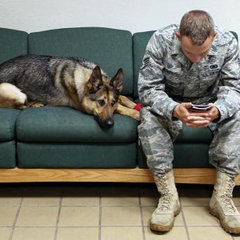 US military dogs are having to be treated for stress after serving in Iraq and Afghanistan