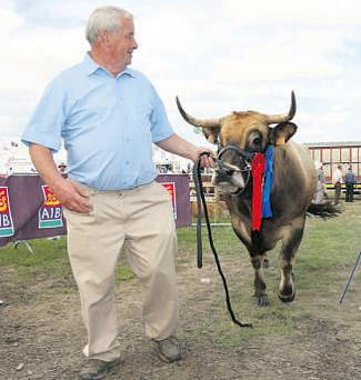 Michael Hanlon, Longford, leads his reserve champion Aubrac