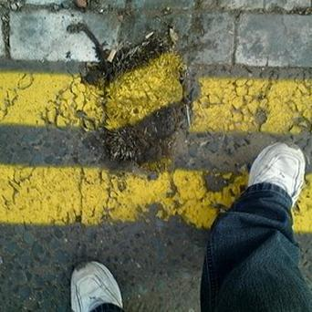 A worker painted yellow lines over a squashed hedgehog rather than move it
