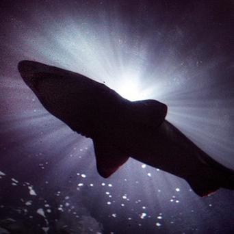 A man said he survived a close encounter with a shark off the Northern California coast