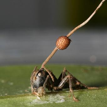An ant killed by a