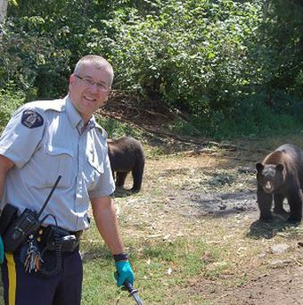 A Royal Canadian Mounted Police officer near a marijuana crop in Christina Lake as two bears walk towards him