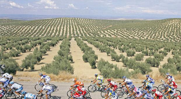 A pack of riders cycle during the 15th stage of the last year's Tour of Spain between Jaen and Cordoba. This year's race starts tonight with a time-trial under lights.