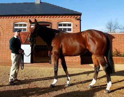 Frankel at Banstead Stud, Newmarket