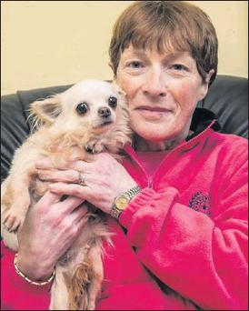 Marian O'Connor from Blackrock, Tralee, with her pet chihuahua, Minnie which was returned to her at the weekend after being stolen from her home back in September.