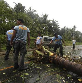 Fallen coconut trees after Typhoon Bopha made landfall in Compostela Valley in south-eastern Philippines (AP/Karlos Manlupig)