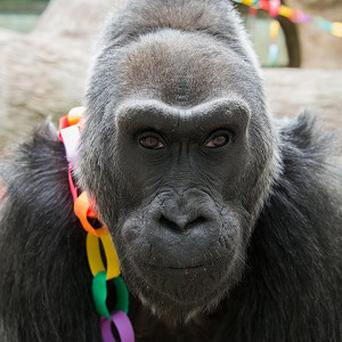 Colo, 56, poses for a photo as she celebrates her birthday at the Columbus Zoo and Aquarium in Columbus, Ohio (AP/Columbus Zoo and Aquarium, Grahm S Jones)