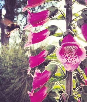 Student dentist Laura Elliot's photo of a bumblebee in her garden in Co Fermanagh, which she took on her iPhone 4, scooped the top prize in a competition run by the UK National Trust