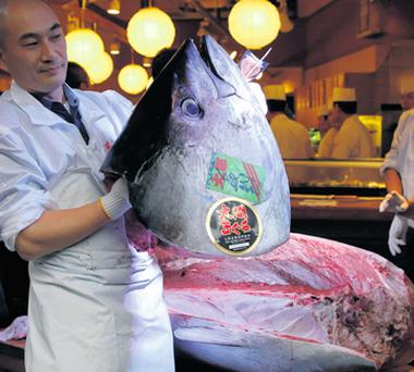 A sushi restaurant worker holding the head of a 489lb bluefin tuna, which sold for eur1.34m at an auction in Tokyo