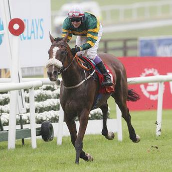 Captain Cee Bee, pictured, will again face Hurricane Fly at Leopardstown