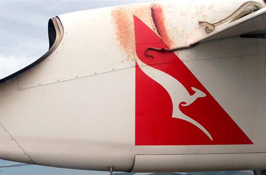A python lies wedged on the wing of a Qantas passenger plan as it flys over Port Moresby. Photo: Reuters