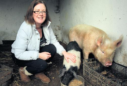 THE GOOD LIFE: Margaret Griffin with Little Pig and Rasher, whom she has raised by hand in Co Meath.