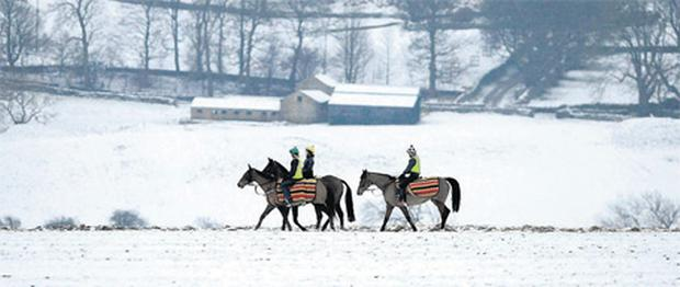 Horses out for some early morning exercise on snow covered gallops in Middleham, England