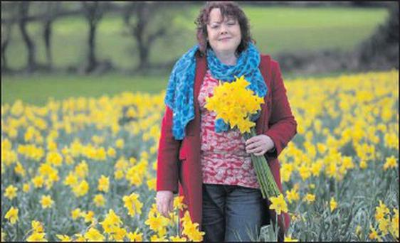 Well known and loved Vivien O'Shea, from Cleeny, Killarney, with her crop of daffodils, which she had grown on their farm for the past 13 years, much to the delight of locals and visitors. She passed away peacefully on Friday, January 4. Credit: Photo by Valerie O'sullivan