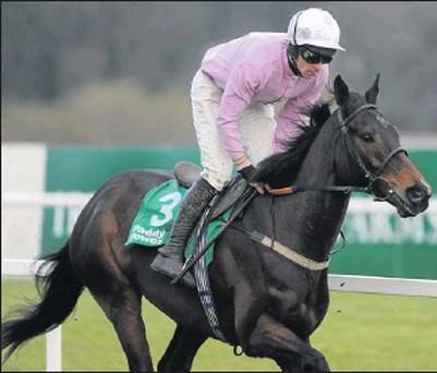 'Solwhit' has been given a clean bill of health after his fine comeback on New Year's Eve.