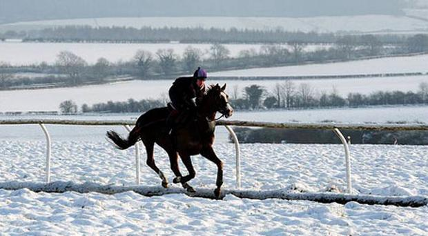 As many race meetings are abandoned due to the weather race horses are exercised in the snow on the gallops outside Malton, North Yorkshire, England.