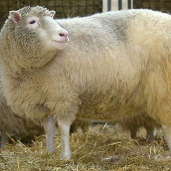 Professor Simon Best's company cloned Dolly the sheep