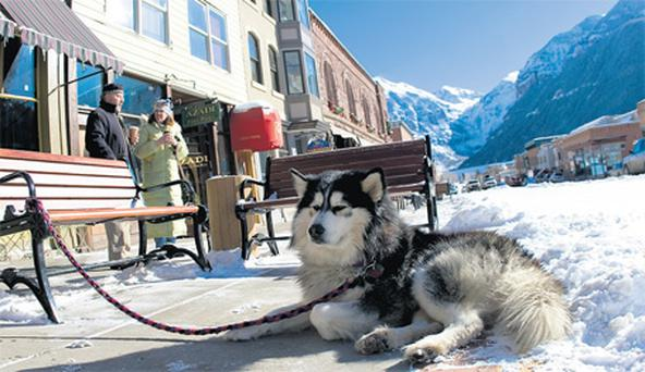 Huskies are a common sight throughout Colorado, where it's not only the ubiquitous winter snow that's cool