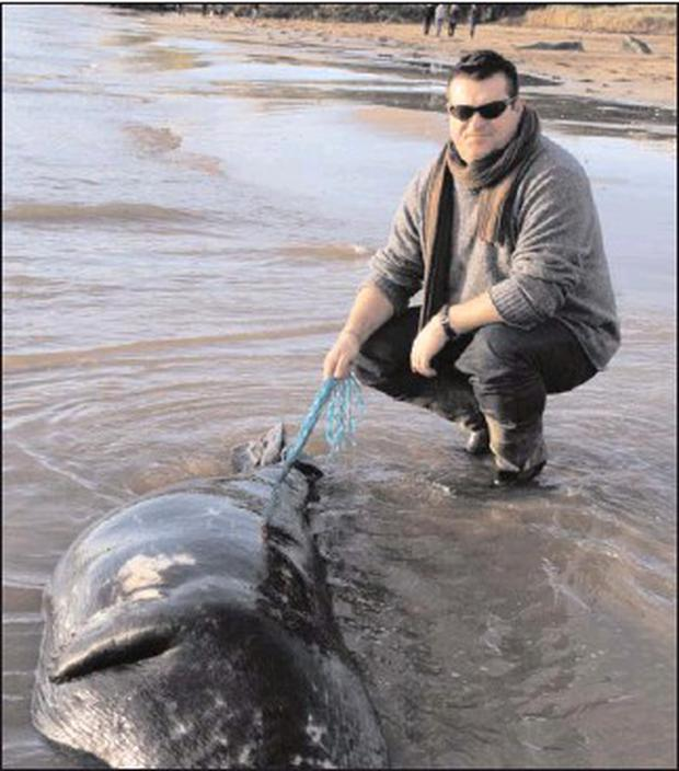 District Conservation Ranger Lorcan Scott with one of the seals that washed up on Duncannon Beach last week.