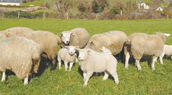 Take full advantage by maximising animal performance from grazed grass.