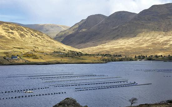 Marine Harvest have fish farms in a number of locations in Ireland. File Photo