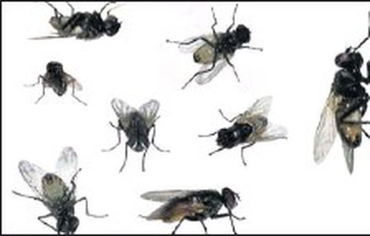 There have been complaints of 'plague of flys'