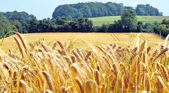 Although entitlements are not tied to land, each one must be supported by a hectare of eligible land