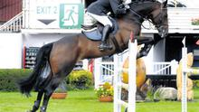 This eight-year-old OBOS Quality gelding sold for €15,500 at last year's sale in Cavan