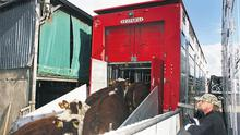 The drivers had been waiting several days for the cattle to be ready.