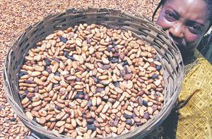 An Ivorian women shows dry cocoa beans at her village