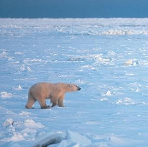 MPs have urged a halt to Arctic drilling until stronger protection against oil spills are in place