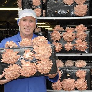 Grower John Dorrian with pink mushrooms, which are set to liven up the vegetables aisle at Tesco