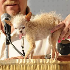 Yoda, the 2011 World's Ugliest Dog Contest winner, has died aged 15 (AP)