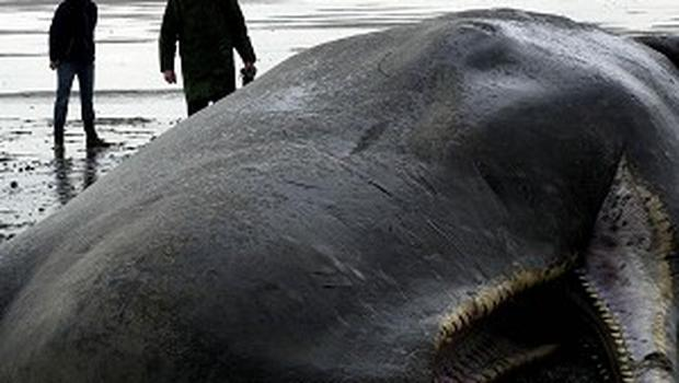 A youth who advertised the teeth and jaw of a dead whale for sale on Facebook will face no further action