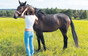 Maiden mares should be well handled prior to being bred to minimise stress during the pregnancy